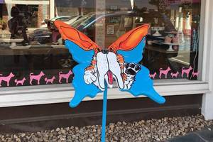 Carousel_image_7f7649a245b5dae1c718_50d37a16429eaebdfb8d_butterflyifo_woofgang