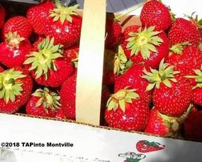 Carousel_image_8257bf0733faaac2458b_strawberries__2018_tapinto_montville