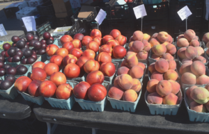 Carousel_image_8265954f603dbdb9181f_peaches_and_plums_at_the_scotch_plains_farmers_market