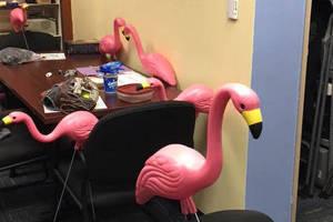 Carousel_image_82c592fd002e8722ea83_10ed7879159a5e26607b_flamingoes_have_a_snack
