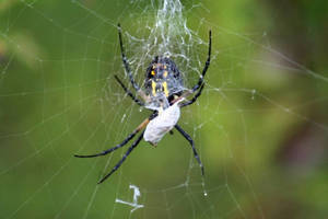 Carousel image 8b11ee2e0e3a6aba4d30 spider in web