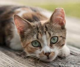 Carousel_image_8b3195925d4b172ea394_cpaw_kitten