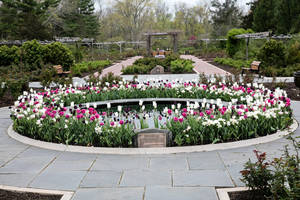 Rose Garden in Bloom copy (1).jpg