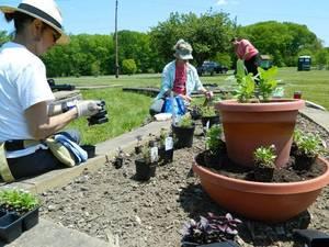 Carousel_image_8f0e5de4deaa623d6fe7_mcc_master_gardening