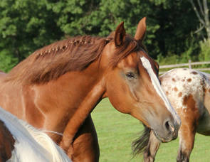 Carousel_image_8fb24e4a44d7ec14c869_horse_profile_copy