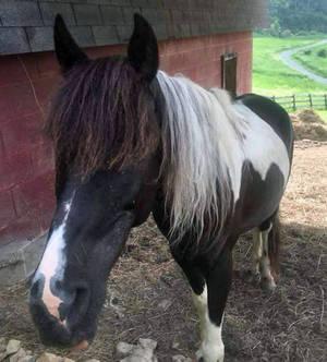 Carousel image 940d0b0b01a504ef476e auction horses001