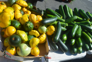 Carousel_image_95924173d27ad3022c3f_gourd-geous_squash_at_the_scotch_plains_farmers_market