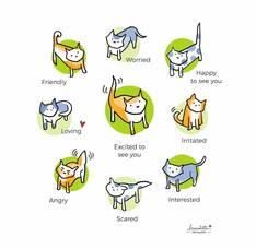 cat-body-language-color-v3-28129-1.jpg