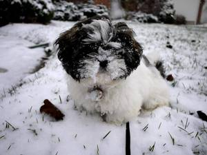 Carousel_image_9b5b7c43c637473183e7_dog_in_snow