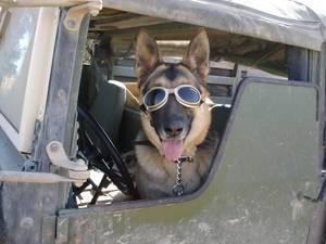 Carousel_image_9c93f54ad604399429ca_war_dogs_doggles