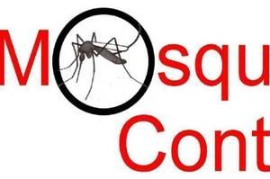 Carousel_image_a1911ccbac61dbb33aad_375fde95403ce8ca4e75_mosquito