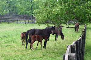 Carousel image a3c870d50574b6d4bbe7 mares and foals