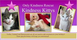 Only Kindness Rescue