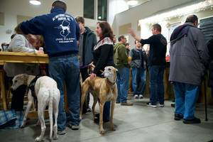 Carousel_image_a70568f8e246d1b32196_lone_eagle_brewing_greyhounds