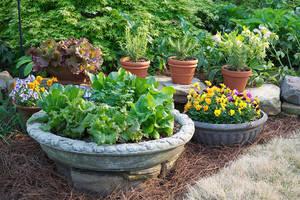 Carousel image aaf331b46dd3169caac9 container garden 3 horiz bonnie plants 2