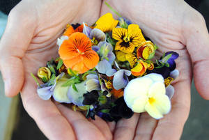 Carousel_image_ab02f8fa418425ac9b65_edible_flowers_marinroots