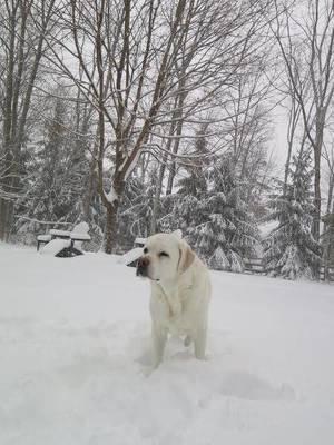Carousel_image_b31a6cb01256905b15dd_snowdaydogbba