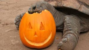 Carousel_image_b3682061b13bc3f7f140_pumpkin___turtle