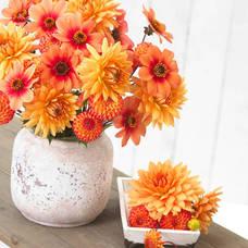 Carousel_image_b43c4e31e07e3eadecbe_dahlia_soft_orange_mix_b_-_longfield_gardens