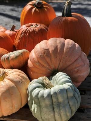 Carousel_image_b5ffeff0cf6ac180c247_pumpkin_patch_2