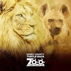 Carousel_image_b71d37db9dd1ec990eec_7dde0cebe73684d815ce_turtle_back_zoo_lions_square