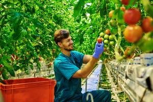 Carousel_image_b783a6cafaaf290a3c96_tomato_farmer