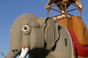 Carousel_image_bdcf48a0f0f913d1b2ed_7a4f84dd0af9fdccb556_elephant