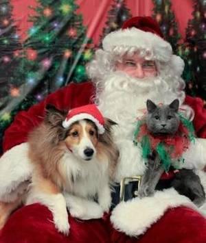 Carousel_image_bde0d37df6a92ab91b68_c9bd959303f4cc0150c6_cat_and_dog_with_santa