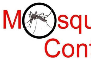Carousel_image_bf620c3f1ae79de0c2cd_608ea011fd852441df47_mosquito