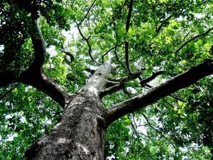 Carousel image c2d35f54378d301f906b majestic tree