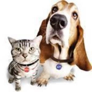 Carousel_image_c53c846b0ae08a46b628_dog_cat_licenses
