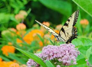 Carousel_image_c5e27d1ad44b61a4f453_yellow_butterfly_warinanco_lake