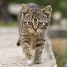 Carousel_image_c624c099da026ef5805b_feral-kitten