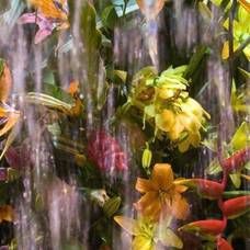Carousel_image_c6627fefe7e4bee8c772_dea62f149d965434cc01_water_and_flower_image_flower-show02