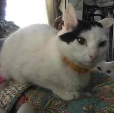 Carousel image ca99face6d0fef79125b b4f45c5bd1bb513d5464 lost cat