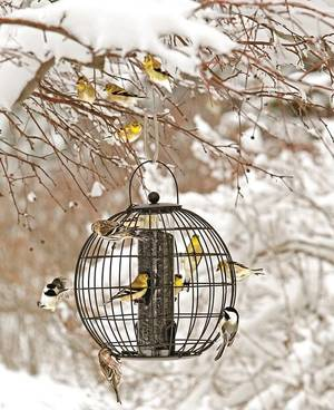 Carousel_image_cabf0be61c503ce4aa53_birds_on_feeder_in_landscape_photo_credit_gardeners_supply_company_-_copy__1_