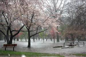 Carousel_image_cc314cd1bd4bbe528063_april_16_flooding_c