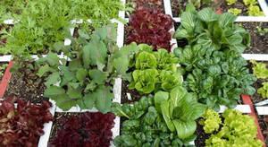 Carousel_image_ce010d41a974a155e2ed_elegant-square-foot-vegetable-gardening-square-foot-vegetable-garden-alices-garden