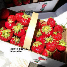 Carousel_image_cf23a123589218bab798_strawberries___gimp_picasa