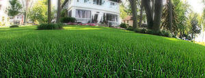 lawn_4402.jpg