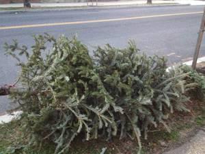 Carousel_image_d4a15debd92d9cc68622_christmas_tree