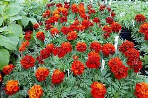 Carousel_image_d647b34d3b686b58b7b4_flowers