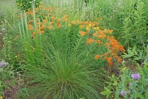 Carousel image d75beec5259bec8d39a1 native plants photo credit melinda myers