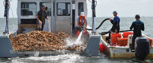 Carousel_image_dafd9b6f3e6ed6001355_oyster_boat_resized__stockton