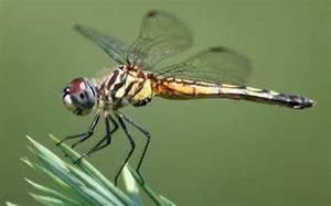Carousel_image_de13bae2359bb55baf89_dragonfly