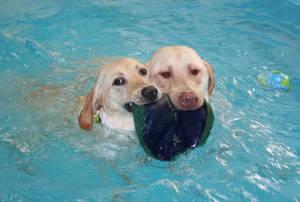 Carousel_image_dfb2e8c2d9140587bc9b_ccf9547b8f74c483b110_dog_swim-lo