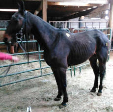 Carousel_image_e65c44b3e93bea4bd351_standardbred_in_kill_pen