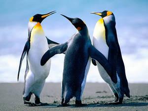 Carousel_image_e795c10a514d6e5d9b15_penguins