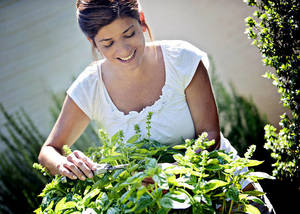 Carousel image e8c7806df0ea3d3b7e80 harvesting basil horiz photo credit bonnie plants