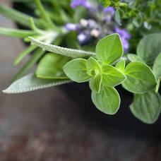 Culinary Herb Garden Class